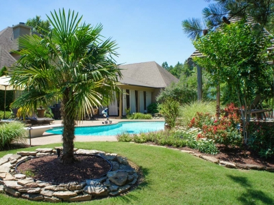 Palm Tree Backyard Pool Landscape